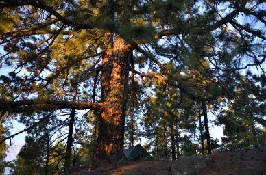 Camp under pinetrees - Tenerife