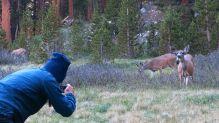 499 Deer at Evolution Valley