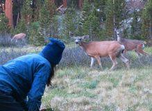 500 Deer at Evolution Valley