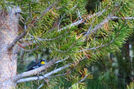 501 Birdy at Evolution Valley