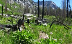 554 Le Conte Canyon to Upper Palisade Lake