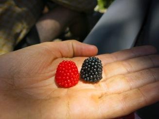 600 berriessss
